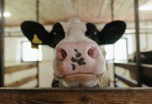 El consumo de carne y los métodos de producción masivos podrían estar detrás de las pandemias
