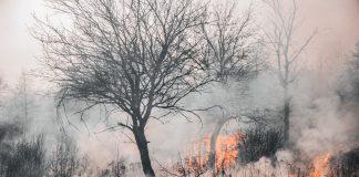En las últimas semanas una ola de calor ha arrasado en varios países del mediterráneo. Hasta el momento no existe un estudio que atribuya que son causa del cambio climático pero en muchos casos son la razón por la que se producen los incendios.