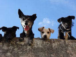 El pasado 6 de octubre, el Ministerio de Derechos Sociales publicó el borrador del Anteproyecto de Ley de Protección y Derechos de los animales. Esta pretende que se prohíba la venta de mascotas en tiendas y que los perros no puedan estar más de 24hs solos, entre otras medidas.